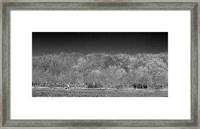 Walking The Dog Framed Print by David French