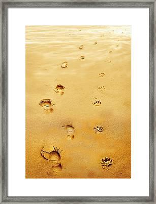 Walking The Dog Framed Print by Mal Bray