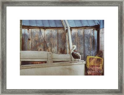 Framed Print featuring the photograph Walking The Plank by Benanne Stiens