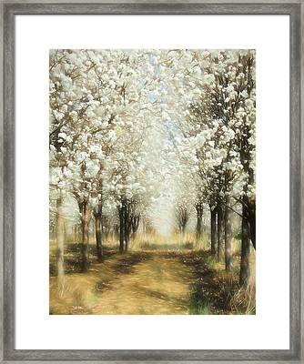 Walking Through A Dream Ap Framed Print by Dan Carmichael