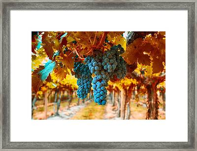 Walking Through The Grapes Framed Print by Lynn Hopwood