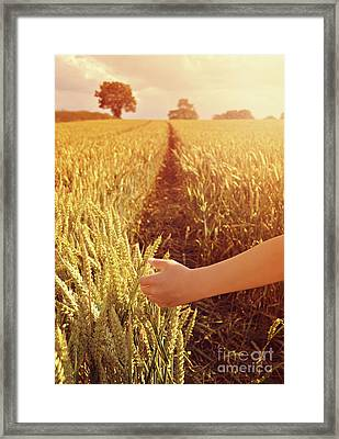 Framed Print featuring the photograph Walking Through Wheat Field by Lyn Randle
