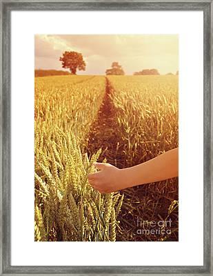 Walking Through Wheat Field Framed Print by Lyn Randle