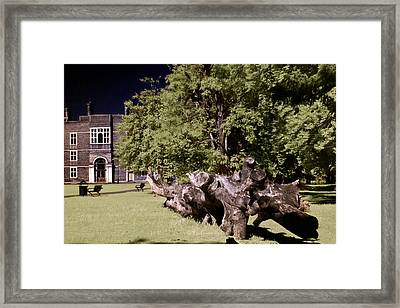 Walking To The Library Framed Print by Helga Novelli