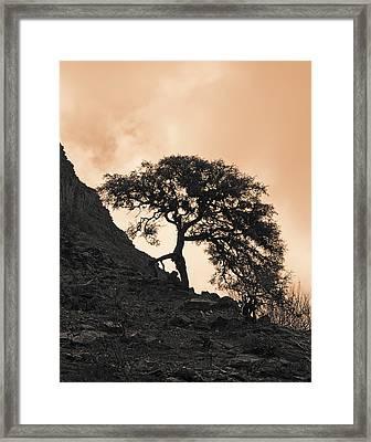 Walking Tree Framed Print