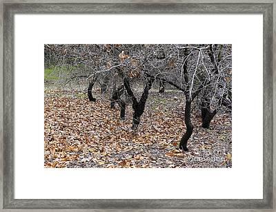 Walking Trees. Framed Print by Viktor Savchenko