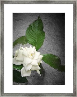 Wall Flower Framed Print by Carolyn Marshall