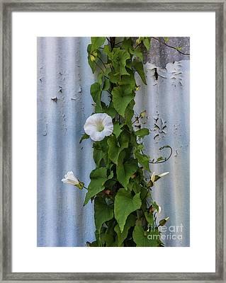 Wall Flower Framed Print