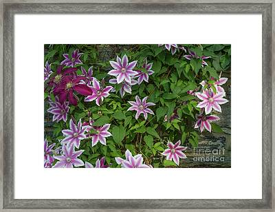 Framed Print featuring the photograph Wall Flowers by Chris Scroggins