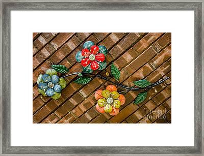 Wall Flowers Framed Print by Debra Martz