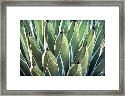 Framed Print featuring the photograph Wall Of Agave  by Saija Lehtonen