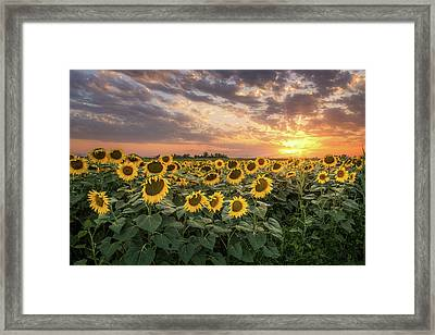 Wall Of Sunflowers Framed Print