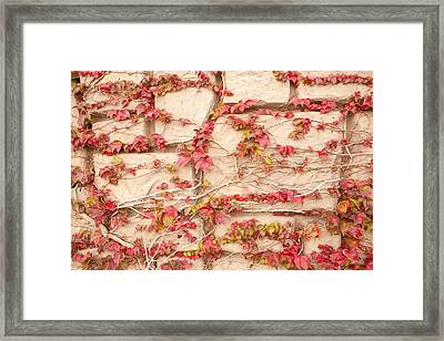 Wall Of Vines Framed Print