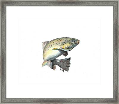 Wallace Brantley Fishing Series Mr. T Framed Print by Sharon Blanchard