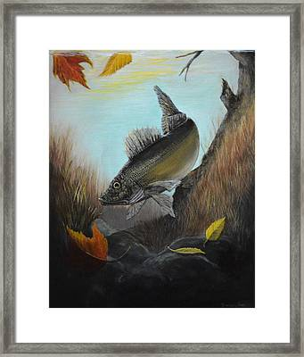 Walleye Fall 1 Framed Print by Kimberly Benedict