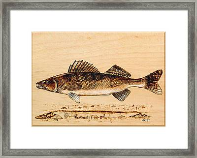 Walleye Framed Print by Ron Haist