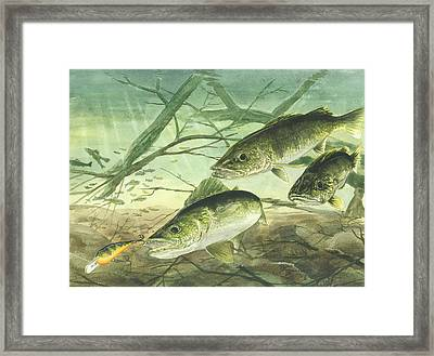 Walleyes Framed Print by Bud Bullivant