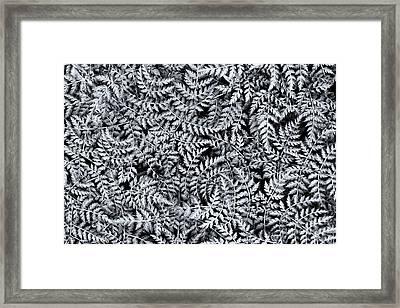 Wallich Milk Parsley Leaves Monochrome Framed Print