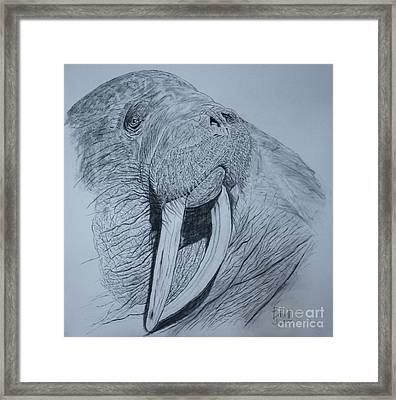 Walrus Framed Print