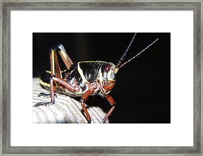 Framed Print featuring the photograph Walter by Don Youngclaus