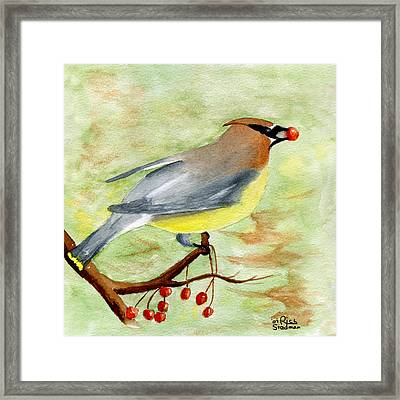Walter Wax Wing Framed Print by Rich Stedman