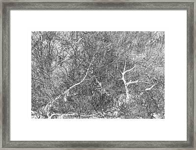 Waltz Of The Forest Framed Print by Lynda Lehmann