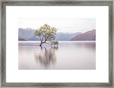 Wanaka Tree Framed Print