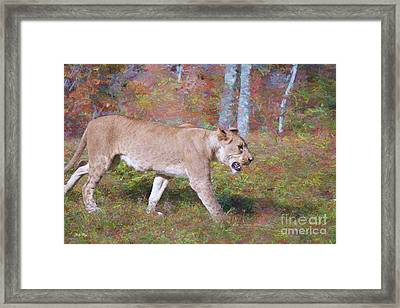 Wander Framed Print by Judy Kay