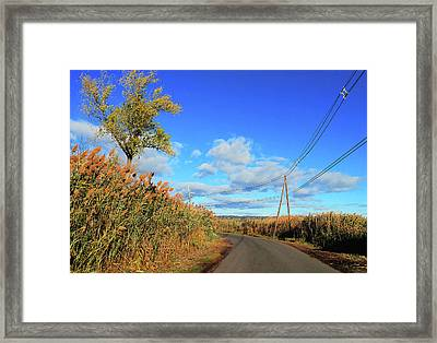 Wanderer's Way Framed Print