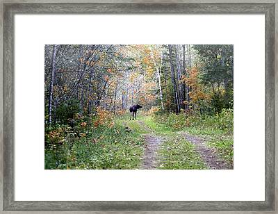 Wandering Around Framed Print