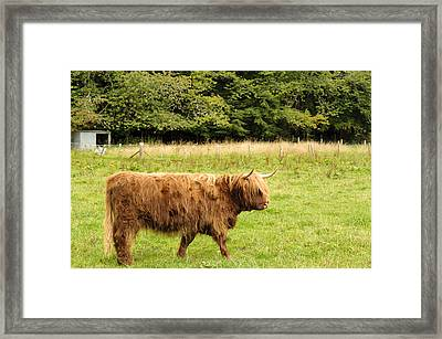 Framed Print featuring the photograph Wandering Coo by Christi Kraft
