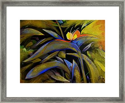 Wandering In The Sunrise Framed Print