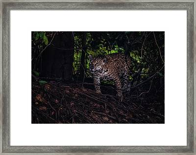Framed Print featuring the photograph Wandering Jaguar by Wade Aiken