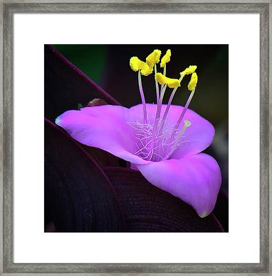 Wandering Jew Framed Print by Michael Putnam