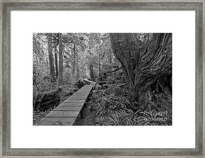 Wandering Past The Giants In Black And White Framed Print by Adam Jewell