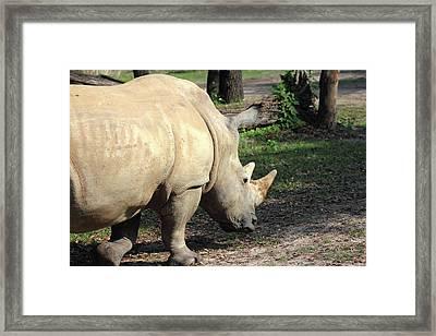Wandering Rhino Framed Print by Mary Haber