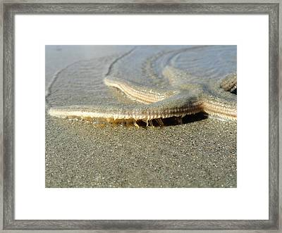 Wandering Star Framed Print by Christopher Spicer