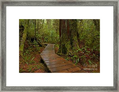 Wandering Through The Rainforest Framed Print by Adam Jewell