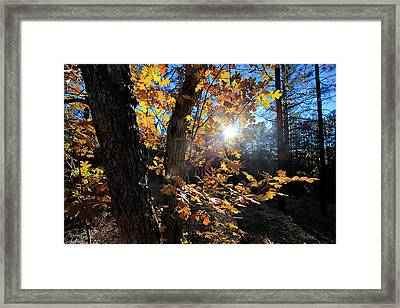Waning Autumn Framed Print by Gary Kaylor