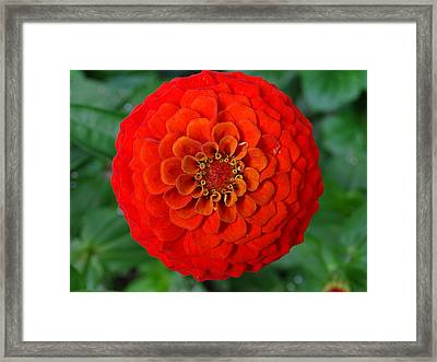 Want An Orange ? Framed Print