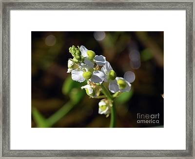 Wapato Framed Print by William Tasker