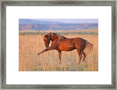 War Horse Framed Print by Sandy Sisti