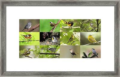 Warblers In Spring Framed Print