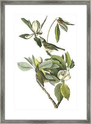 Warbling Vireo Framed Print by John James Audubon