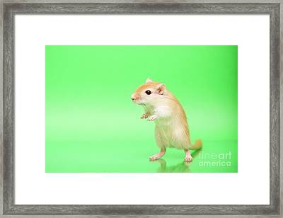 Warm And Cute 3 Framed Print by Svetlana Svetlanistaya