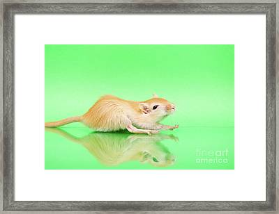 Warm And Cute 4 Framed Print by Svetlana Svetlanistaya