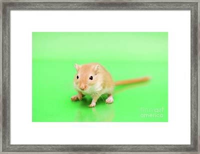 Warm And Cute Framed Print by Svetlana Svetlanistaya