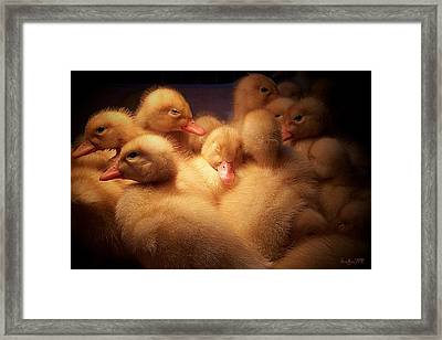 Warm And Fuzzy Framed Print by Robert Orinski