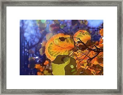 Warm Autumn Day Framed Print by Kat Besthorn