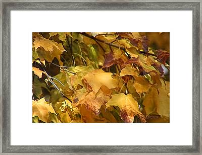 Framed Print featuring the photograph Warm Fall Leaves by Michael Flood
